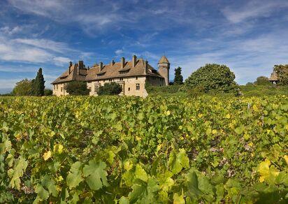 Ripaille Castle - Ripaille Wine
