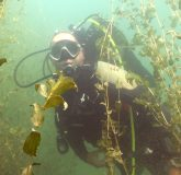 Basics of scuba diving in the lake