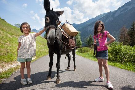 Randonnée faune et flore avec des ânes