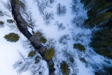 Snowshoe trail : To Bayard via the waterfall