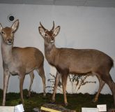 Mueseum of Wildlife