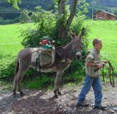 Rent donkey for free ride