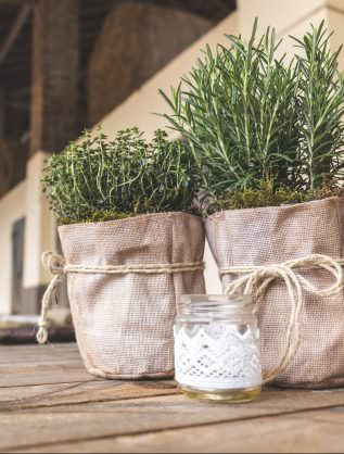 herbes aromatiques-unsplash