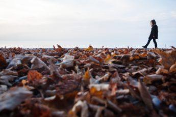 Parc de la Pinède en automne - Pierre Thiriet